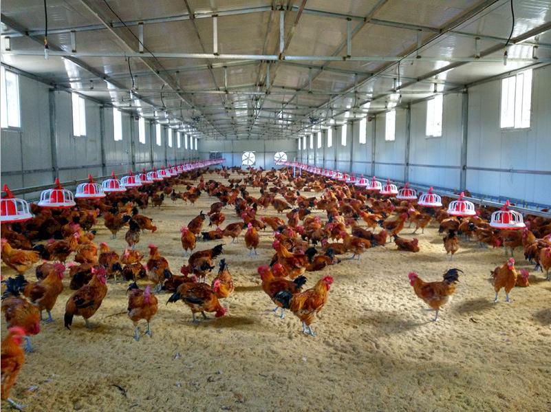 现代化养殖场图片