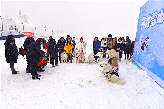 国内首个大型雪地萌宠活动拉开西岭雪山南国冰雪节大幕